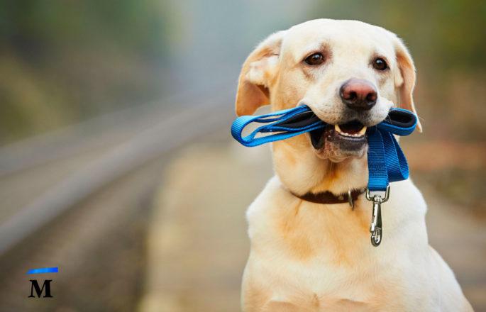 Как перевозить собаку в поезде?